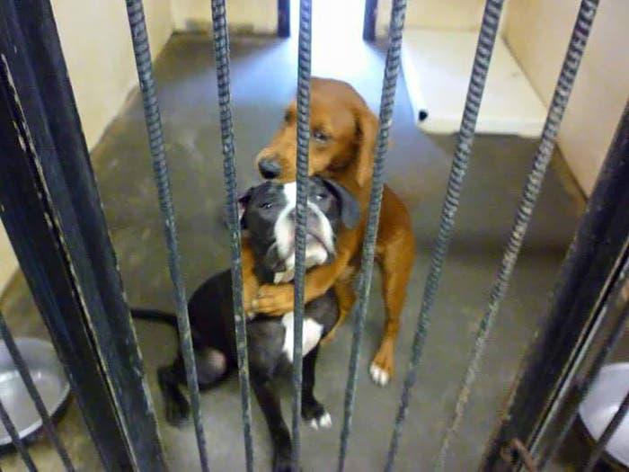 abraço-cães-salvamento