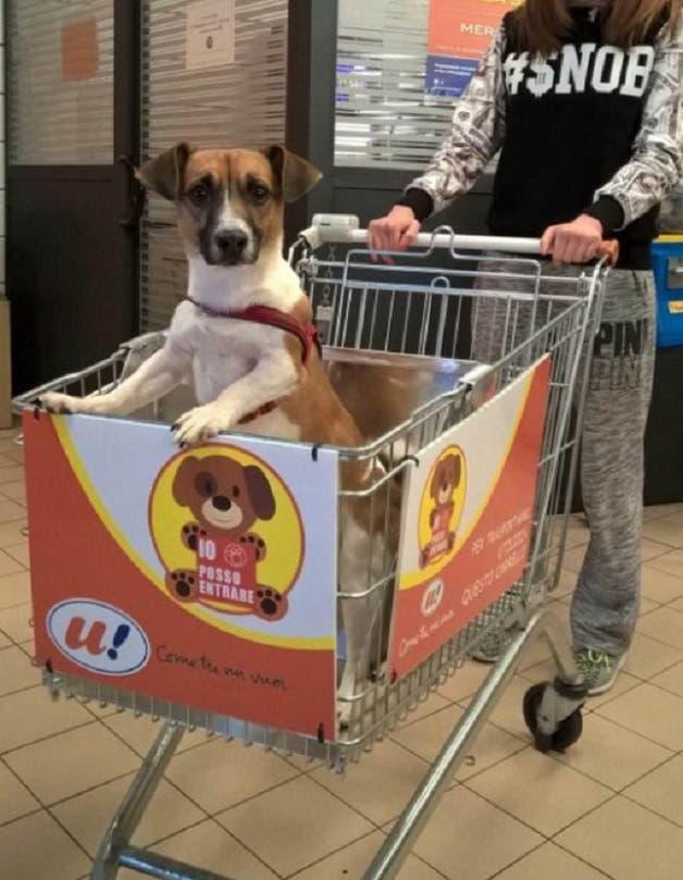 cao-supermercado1