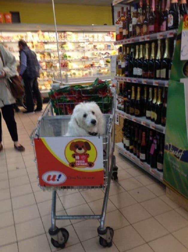 cao-supermercado2