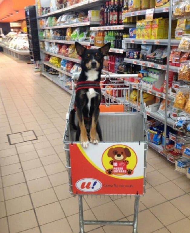 cao-supermercado3