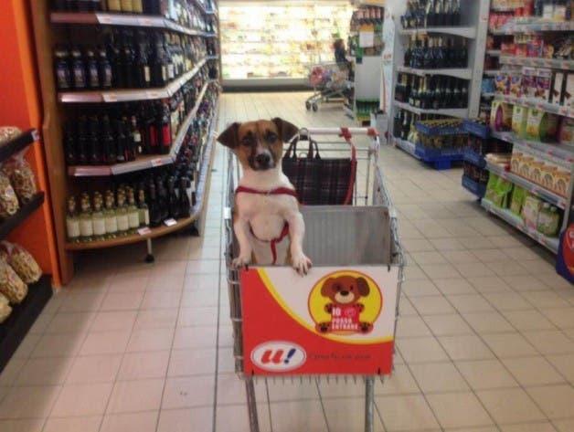 cao-supermercado4