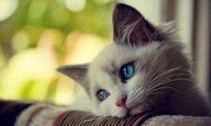 cat-home-alone