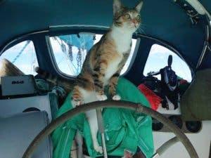 sailing-cat-travelling-world-liz-clark-12