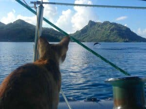 sailing-cat-travelling-world-liz-clark-19