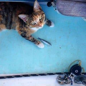 sailing-cat-travelling-world-liz-clark-35