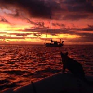 sailing-cat-travelling-world-liz-clark-45