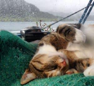 sailing-cat-travelling-world-liz-clark-53