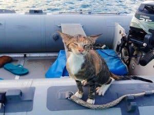 sailing-cat-travelling-world-liz-clark-55