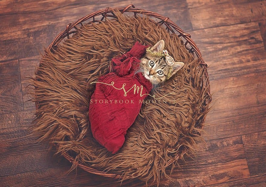 adopted-cat-photoshoot-newborn-storybook-moments-2
