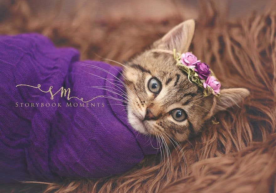 adopted-cat-photoshoot-newborn-storybook-moments-3