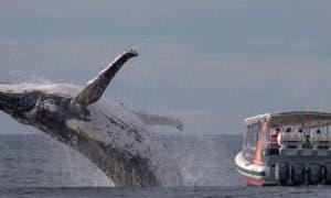 viral-foto-baleia