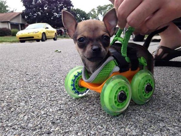 creative-dog-owners-29-57bc1920b3c6a__605