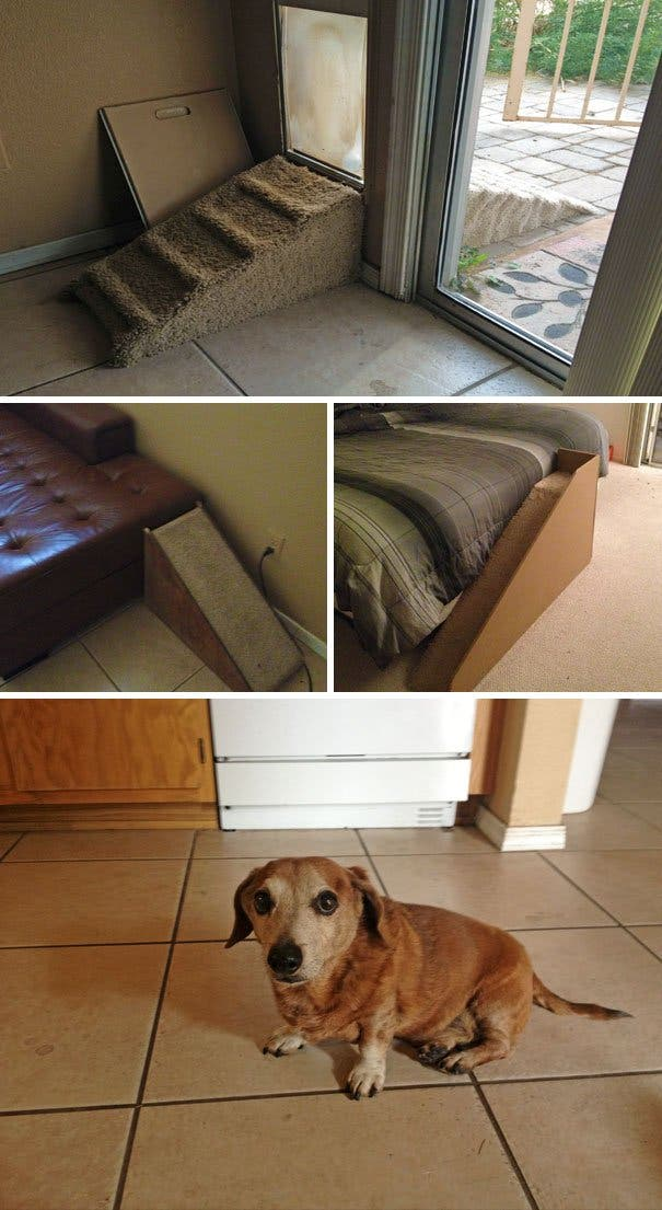 creative-dog-owners-30-57bc4985778df__605