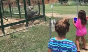 irritar animais zoo 2