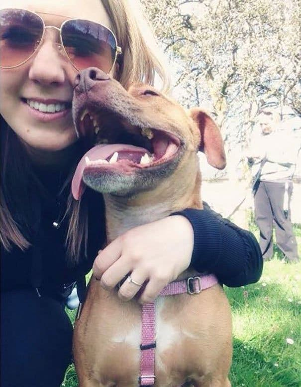 old-cat-attacks-7-pit-bulls-baby-canada-1