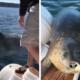 seal-jumps-boat-killer-whales-fb