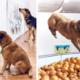world-first-dog-art-exhibition-dominic-wilcox-london-fb2