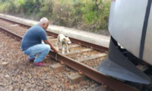 comboio-cadela
