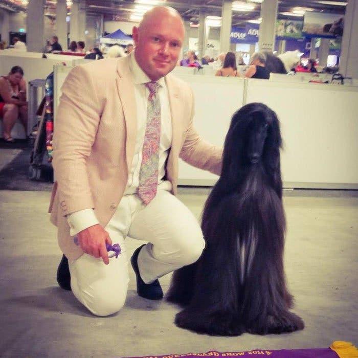 long-hair-afghan-hound-tea-6