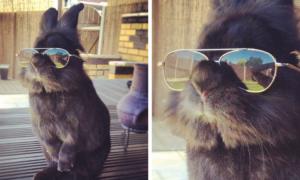 oculos-coelho